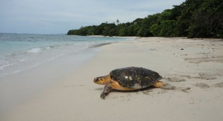 Fight the Impacts of Climate Change on Turtles in Panama