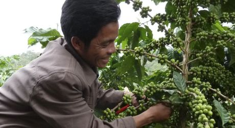 Boost Sustainable Coffee Production in Laos