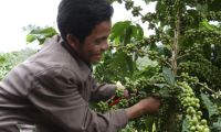 Boost Sustainable Coffee Production in Laos in Lao PDR, Run by: CARE Australia